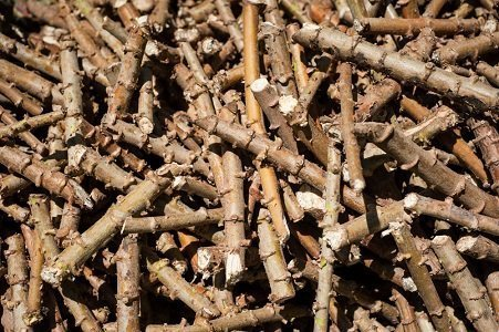 Cassava stem cuttings image