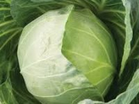 Queen f1 cabbage seeds image