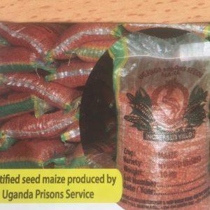 UH 5051 maize seeds image